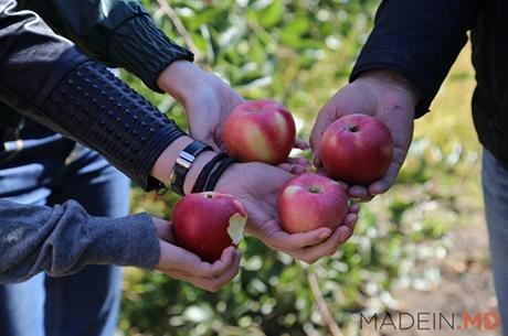 A visit to the apples and plums orchards!