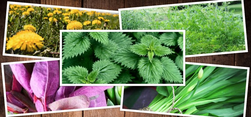 The First Herbs of Spring - an Important Source of Vitamins and Nutrients